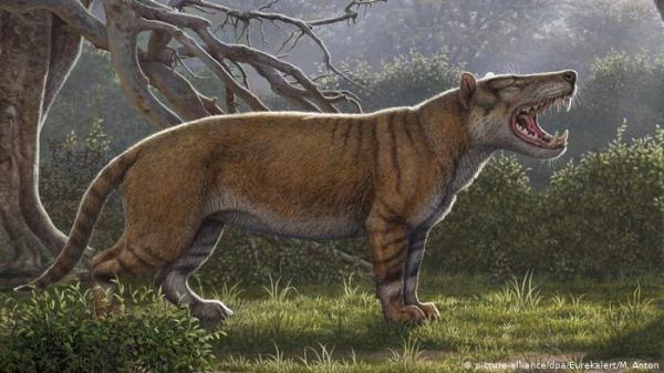 اكتشاف أكبر حيوان ثديي مفترس عاش على سطح الأرض