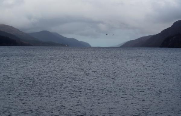 """نُسجت حولها الأساطير.. علماء يقولون إن وحش بحيرة أسكتلندا """"المظلمة"""" قد يكون مجرد """"سمكة"""""""
