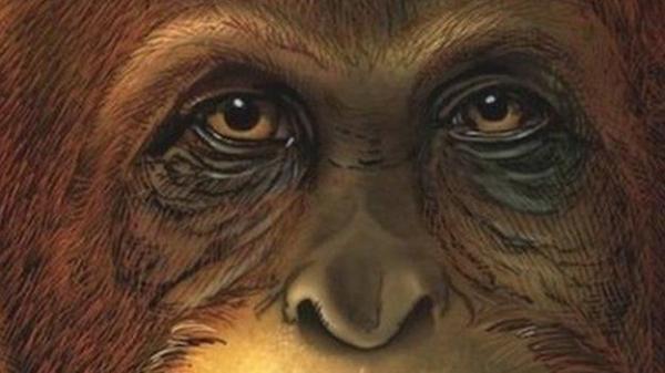ما هي أسرار أكبر نوع من القرود عاش على الأرض؟