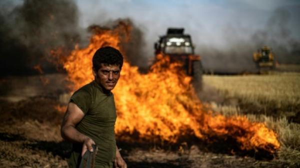 مقتل عشرة أشخاص في حرائق اجتاحت حقولاً للقمح في شمال شرق سوريا (المرصد)