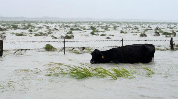فيضانات هيوستن: حظر التجول ليلا لمنع السرقة والنهب في المدينة