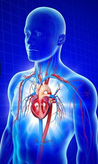هل تعلم كم يبلغ قلبك من العمر؟