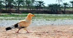 حكومة باسندوة تقر لائحة تنظيم استزراع الاحياء المائية