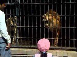 """وفاة 3 حيوانات نادرة بحديقة """"إب"""" بسبب الإهمال وسوء التغدية"""