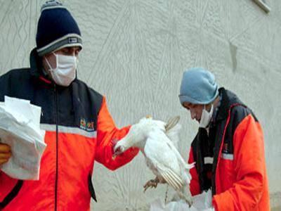 """الصين: احتمال حدوث موجة وباء جديدة من مرض """"انفلونزا الطيور"""" في الشتاء"""