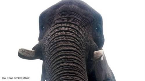 """بالصورة.. فيل يلتقط صورة """"سيلفي"""" لنفسه"""