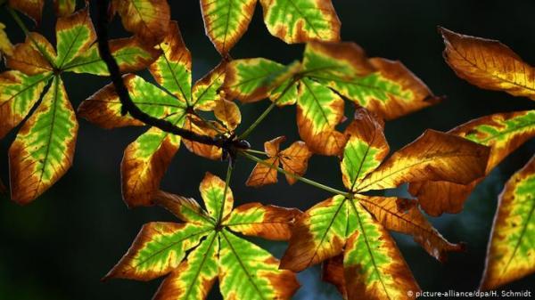 هل تؤثر أوراق الشجر المتساقطة في الخريف على سرعة دوران الأرض؟