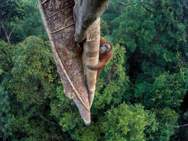 """أجمل الصور الفائزة بمسابقة """"مصور الحياة البرية 2016"""""""