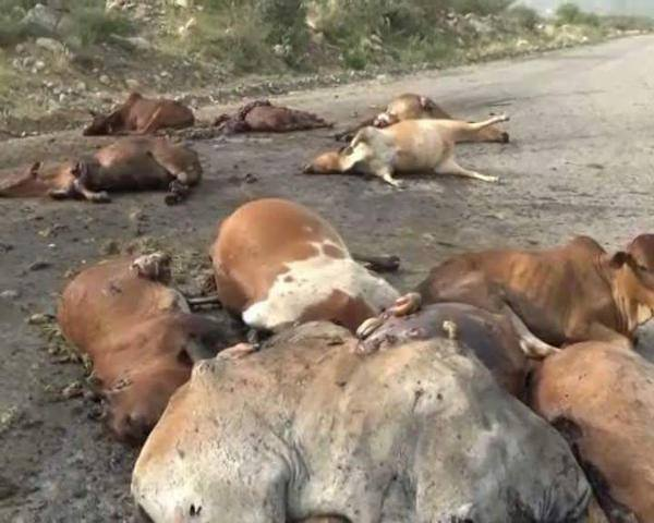 ضحايا 5 غارات لمقاتلات العدوان السعودي على مزرعة الابقار والخيول برصابة التابعة إدارياً لمديرية جهران محافظة ذمار الخميس 1 أكتوبر/ تشرين الأول 2015،